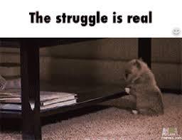 The Struggle Is Real Meme - puppy dog struggle the struggle is real know your meme