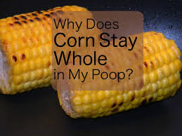 How Many Times Should You Go To The Bathroom Why Does Corn Come Out Whole In My Owlcation