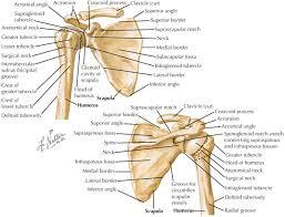 Supraglenoid Tubercle Shoulder Clinical Gate
