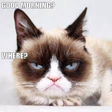Angry Cat Good Meme - lolcats good morning lol at funny cat memes funny cat pictures