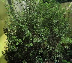 native nz plants image gallery of outdoor plants jungles plant hire wanganui
