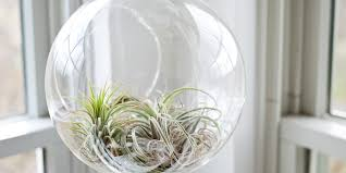 casa wellness natural air purifying san clemente times
