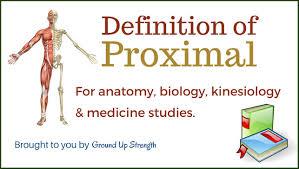 Human Anatomy Terminology Proximal Definition Anatomy Kinesiology Medicine Youtube