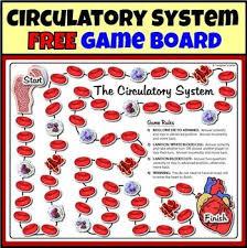 the 25 best circulatory system ideas on pinterest circulatory