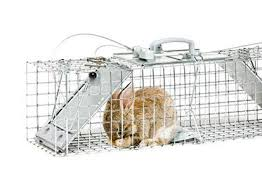 How Do I Get Rid Of Rabbits In My Backyard How To Get Rid Of Rabbits Rabbit Removal Havahart