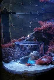 10 coisas que s existem na casa do bill gates ultra curioso bill 110 best images about aquariums on pinterest home interiors bill gates