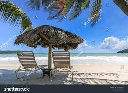 long chair palm tree shade on stock photo 184808810 shutterstock