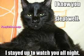 Funny Cats Meme - i know you slept well funny cat memes