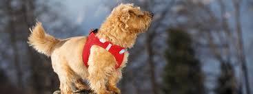 my curli curli vest air mesh dog harness