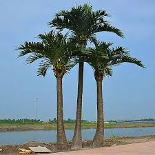 used artificial trees for sale used artificial trees for sale
