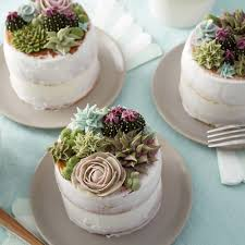 Baking And Cake Decorating Stunning Succulent Cakes Wilton