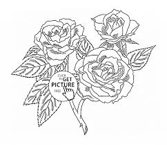 realistic roses coloring page for kids flower coloring pages