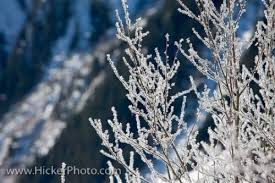 frosted trees wilderness landscape austria photo information