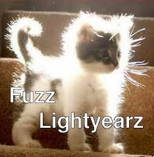 Funny Memes About Cats - image funny cat meme fuzz lightyear jpg animal jam clans wiki