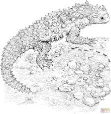 horned toad coloring page free printable coloring pages