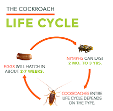 How To Get Rid Of Roaches In The Bathroom Cockroach Facts All About Roaches Roach Control