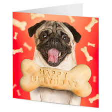 Happy Birthday Pug Meme - list of synonyms and antonyms of the word happy birthday pug