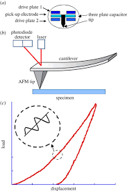 nanobiomechanics of living cells a review interface focus