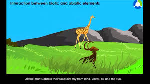 interaction between biotic and abiotic elements youtube