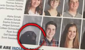yearbook finder free at this virginia high school a service dog gets his photo in the