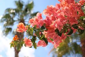 summer gardening tips to keep your plants fresh u0026 blooming