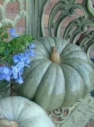 best 25 blue pumpkin ideas on pinterest blue fall decor white