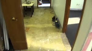 Costco Harmonics Laminate Flooring Price Floor Harmonics Moisture Barrier Harmonics Laminate Flooring