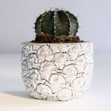 Seeking Cactus Cast Of A Chen Chen Williams Cool