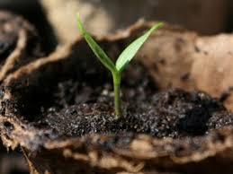 Plants To Grow Indoors 9 Vegetables To Grow Indoors Reader U0027s Digest