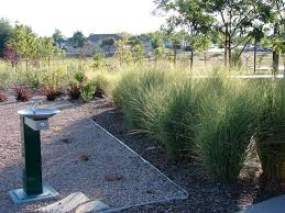 18 best ornamental grasses for utah landscapes images on