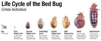 how can you get rid of bed bugs how to get rid of bed bugs innovative pest management