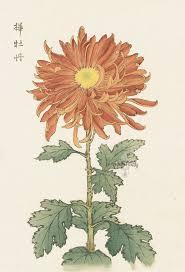 Japanese Flower Artwork - 58 best 100 chrysanthemums images on pinterest japanese art