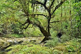 Adaptations Of Tropical Rainforest Plants - various tropical rainforest plants conserve energy future