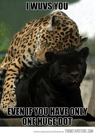 Funny Panthers Memes - i still love you hug leopards and sauces
