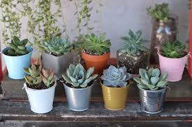 succulent planters for sale 2