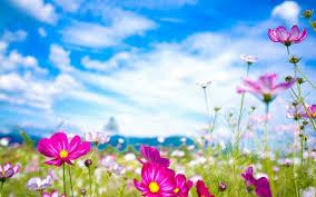 good morning spring season flowers on the field