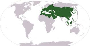 Mongol Empire Map Wi The Mongols Conquered The Entire Known World Alternate