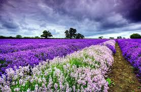 fond ecran bureau fond ecran gratuit paysage avec des fleurs pour le bureau de votre