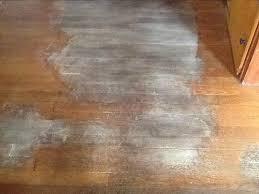 removing urine stains from hardwood floors hometalk