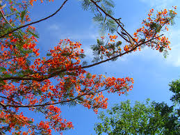 Nice Flower Picture - file nice flowers on a tree in the tiger temple jpg wikimedia
