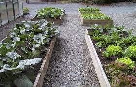 fall and winter vegetable planting guide