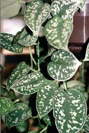 52 best plants that are toxic for pets images on pinterest