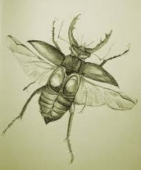 drawn bugs sketch pencil and in color drawn bugs sketch