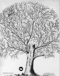ancient sears tree
