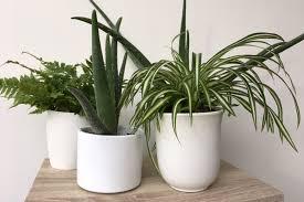 benefits of houseplants the health benefits of houseplants hills plants
