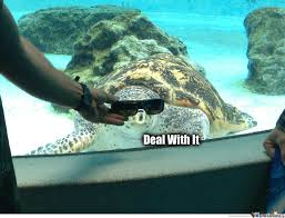 Funny Turtle Memes - deal with it turtle by fatkidsgowii meme center