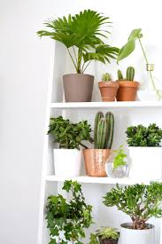 Home Decorating Plants Plants Home Decor Perfect Outdoor Decorating With Plants And