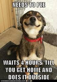Lawyer Dog Meme - dogs know your meme