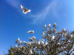 Symbolism Of A Tree by Doves As Symbols Wikipedia