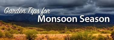 plants native to arizona gardening tips for monsoon season